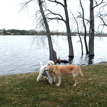 Willow & Blaze have not ventured into the lake yet!