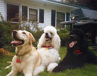 Cameia, Keiko and their  special friend Blaze in Vermont